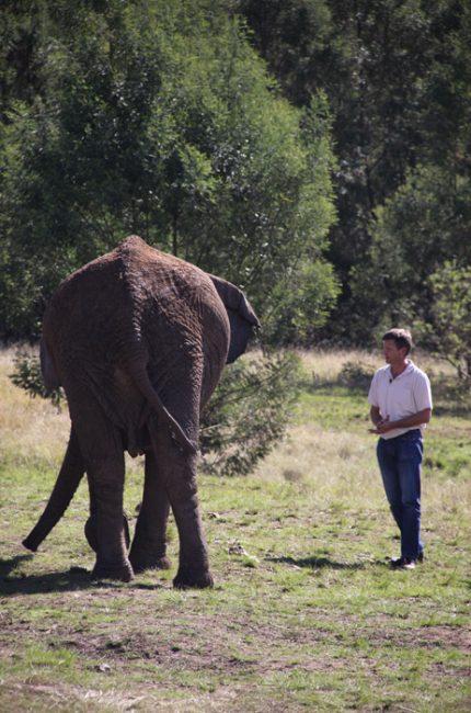 elephant release